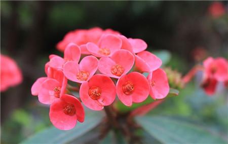 根据花卉的生理平衡原则施肥