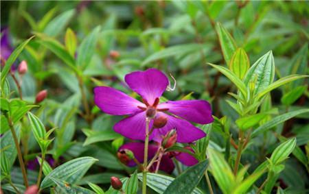 根据花卉不同生长发育时期施肥