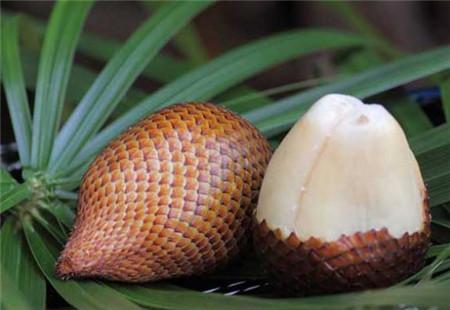 蛇皮果的果肉有益于人体的皮肤