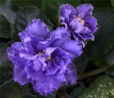 赏花要注意蜂虫
