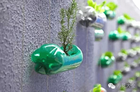 塑料瓶扦插花