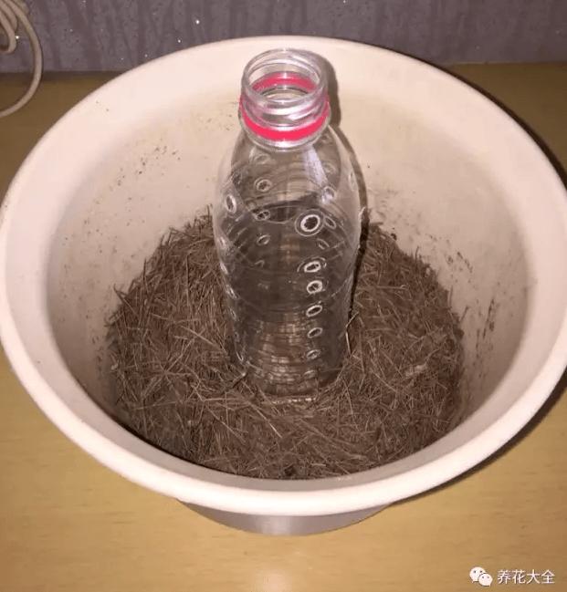 绿萝柱制作过程