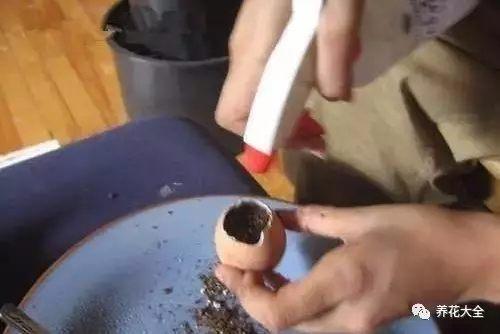 蛋壳花盆2