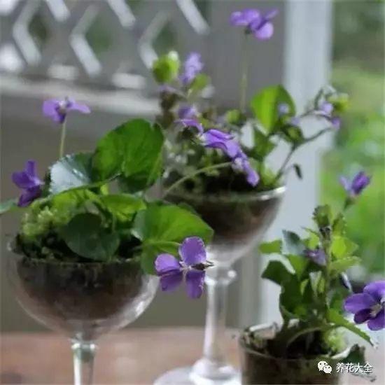 酒杯花盆2