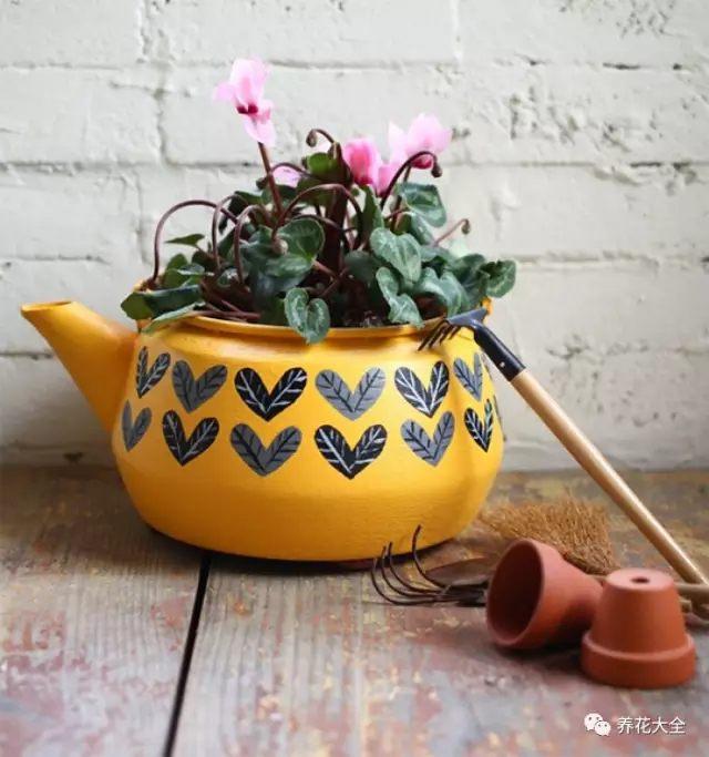 水壶花盆1