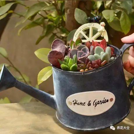水壶花盆3