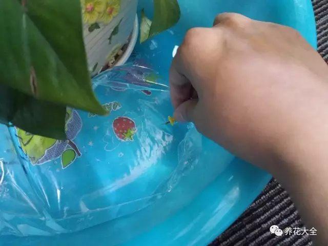 懒人浇水5