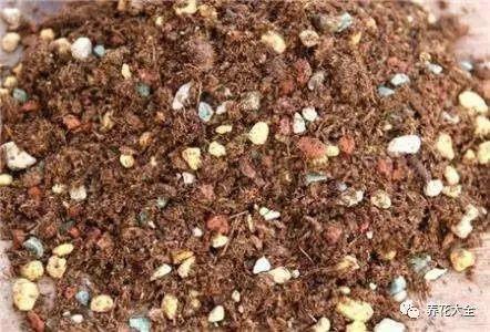 在温室、大棚等,湿度大、闷热的地方,可以用腐叶土:珍珠岩:赤玉土:粗砂=3:3:1:1的比例配制。
