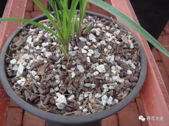 相对复杂的配方,珍珠岩:腐叶土:塘基石:蛇木屑:仙土:椰糠=1:1:1:1:1:0.5