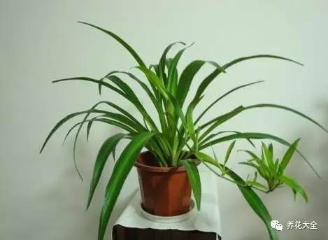 用手搬起来花盆,在地面上轻轻磕几下,让土壤和花盆分离开来。