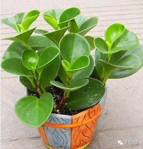每天喷水一次,保持微微湿润。20天左右,就能生根,基本是100%生根。