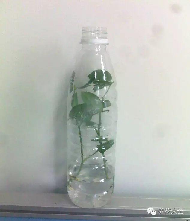 将矿泉水瓶放在通风且有散射光的位置,使叶片能够进行光合作用。