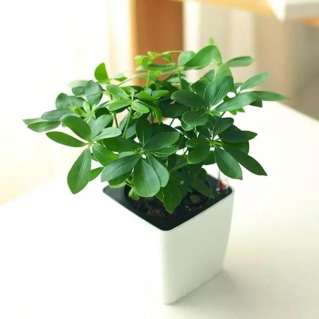 直接灌根即可,注意,要是喜欢偏碱性土壤的花卉才可以的哦。