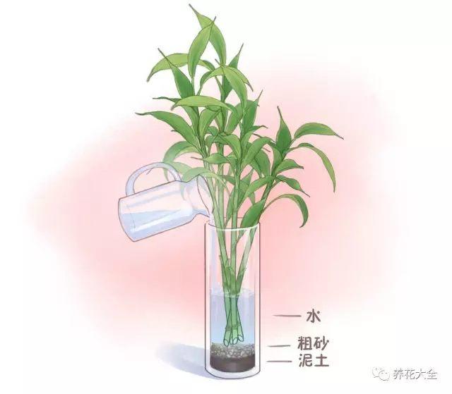 (4)往瓶中加入纯净水,水加到玻璃瓶的一半即可。