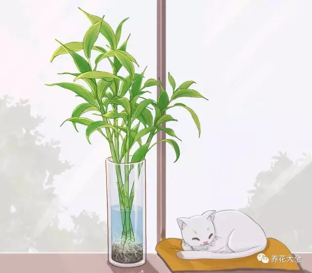 (6)富贵竹会慢慢长根,茁壮成长!