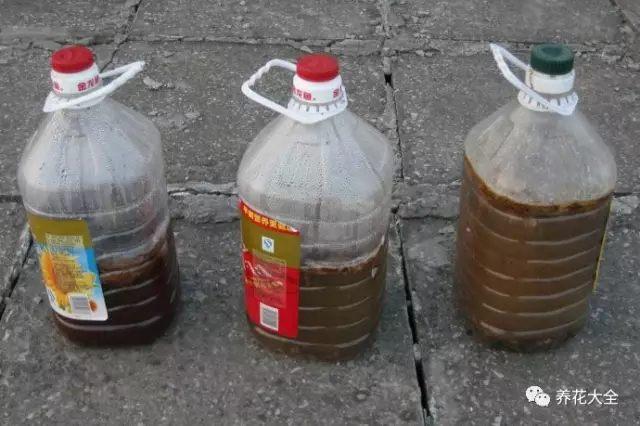 鱼肠里含有非常丰富的磷钾肥,将鱼肠沤制成肥料,对于月季、三角梅等开花多、花期长的花来说,营养是非常丰富的。将买来的鱼肠装在塑料瓶里,然后加点水,放在太阳下暴晒沤肥,大概2-3个月就能用了。