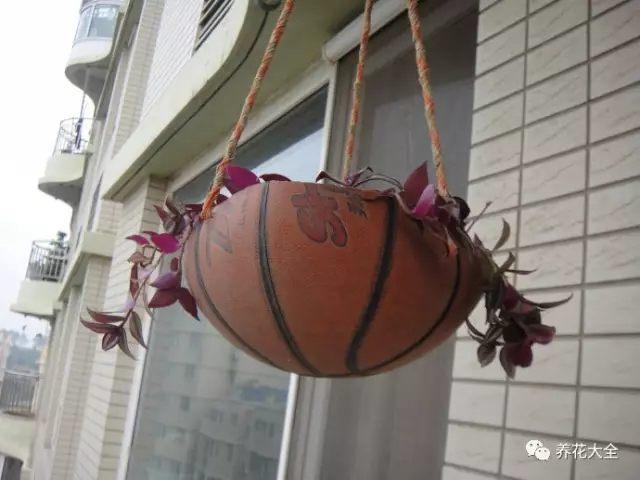 家里破了的篮球,从中间直接切割开,种上花吊起来,就变成了很漂亮的花盆了。