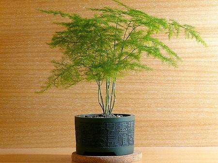文竹的施肥方法