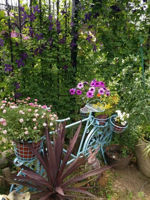 在这〓样一个院子里, 你可以做任何你想做的事情,。 在短暂的人生中,趁着时光还在, 把年轻时候的遗憾,全〓都一一补回来。
