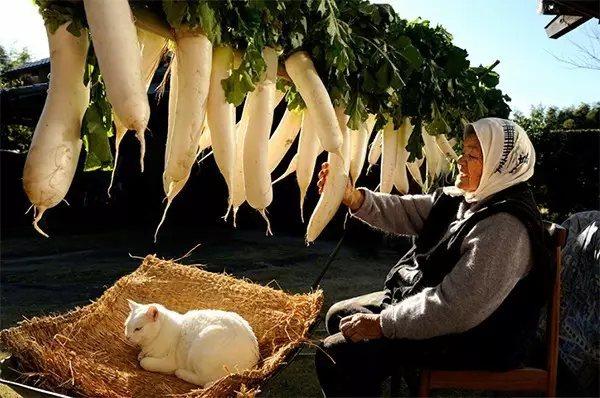 奶奶在阳光下晒萝卜, 她陪在她身边, 也顺便在稻草上晒背。