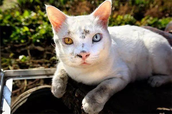 奶奶被弄得满脸泥土, 小白猫也变成小脏猫。 但是幸福的笑容丝毫没有褪去。