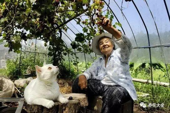 福丸最喜欢和奶奶在葡萄架下乘凉, 有轻轻摇曳的阳光, 还有葡萄沁人心脾芳香, 真是幸福极了。