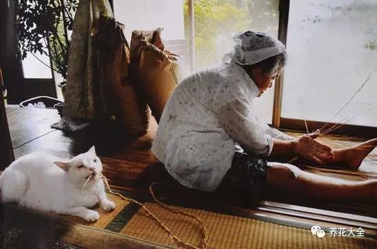 而福丸的生命里只有一件事, 就是无论奶奶在哪里、在做什么, 福丸都陪在她身边。2