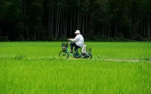春天来了, 骑单车带你去看看田野。