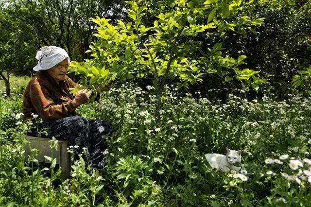 它们的故事里, 不只有奶奶和福丸。 她们走过的每一条路, 一起乘过凉每一棵树、 还有一起摘过的果实, 都是他们故事的一部分。
