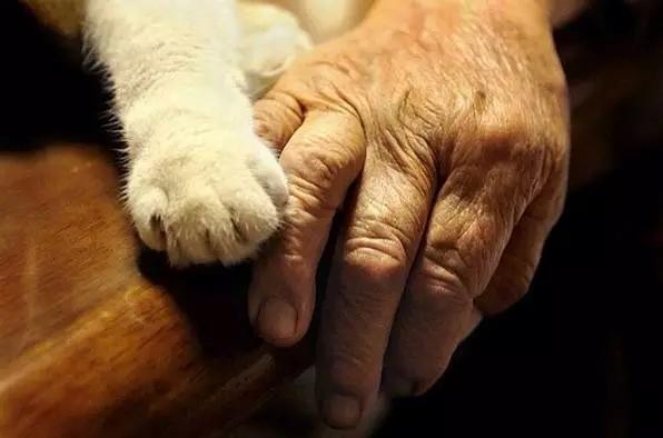 握一握奶奶的手, 福丸就会觉得很安心。