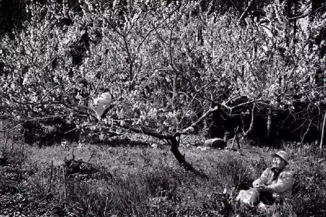 """""""桃花开了,我在树上看花,奶奶在树下看我"""""""