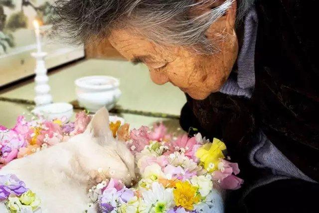 无奈,2015年, 福丸因为肾衰竭过世。 无法陪伴继续奶奶了。