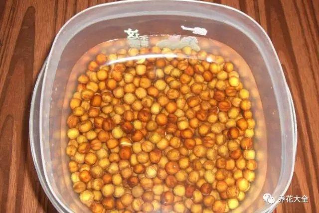 1、挑选健康饱满的豌豆,放在温水中浸泡24个小时以上,水位一定要没过豌豆。