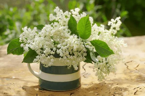 各种家养花的-夜来香   夜来香开花时散发的香气,会让人感到胸闷气短,如果家中有