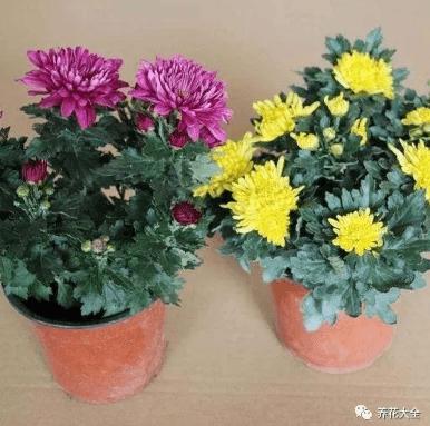 水蔫康复的花