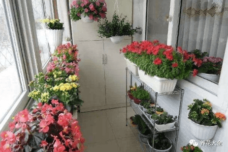 风蔫补救的花