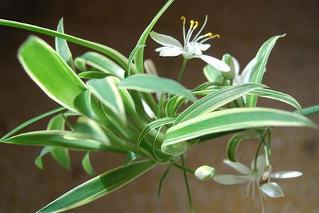 壁纸 花 盆景 盆栽 植物 桌面 450_300图片