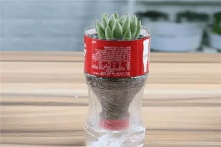 自动吸水花盆