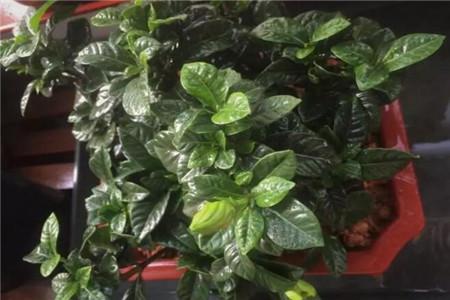钾肥过多的植物