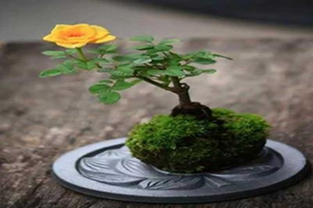 好看的苔玉盆景