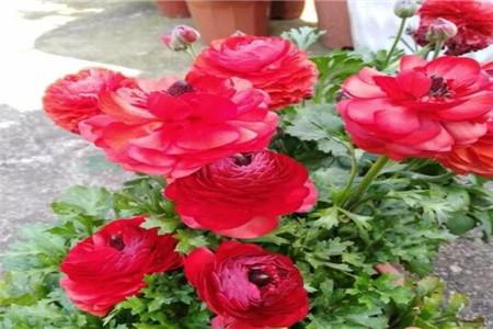 漂亮的花儿