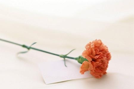 母亲节送什么花最好_劳动节适合送什么花 - 花百科