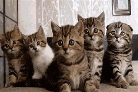 全社区的猫