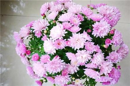 现在不养这种花,夏天就白过了,后悔都来不及!(www.ijiuai.com)