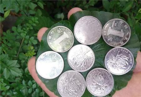 铜钱草叶子