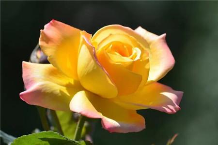 红色、黄色花