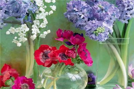 红色、紫色花