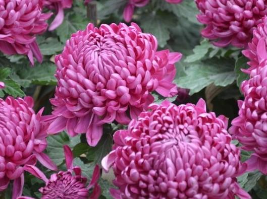 秋天养点什么花?选这3种,它们就喜欢在秋天开花开满盆