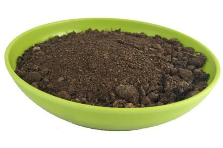 君子兰换土能用旧土吗,换完后要浇水吗?