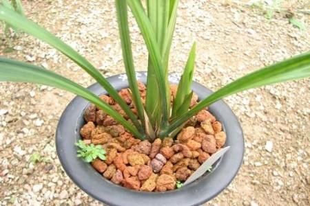 兰花开花后怎么处理:怎么浇水、茎怎么剪?